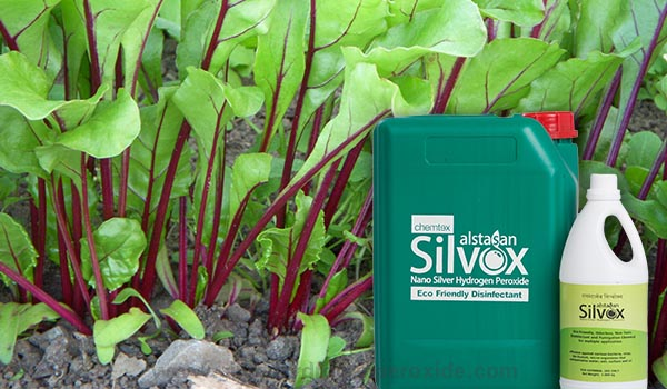 Beetroot_Cultivation_Disinfection1.jpg
