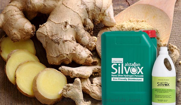 Ginger_Cultivation_Disinfection1.jpg
