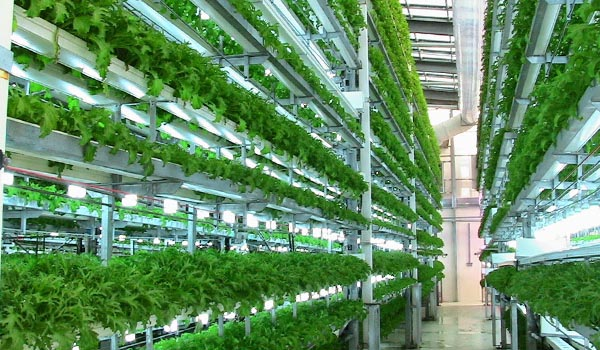 Nursery_and_High_tech_cultivation_Sanitation.jpg