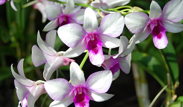 Orchid_Cultivation_Disinfection1.jpg