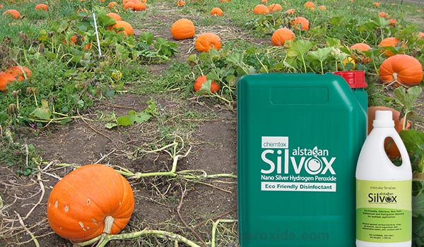 Pumpkin_Cultivation_Disinfection1.jpg
