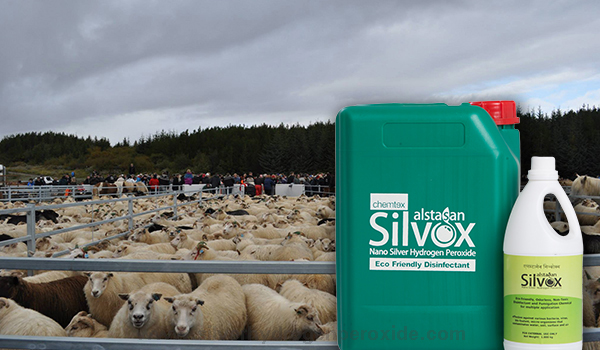 Sheep_Pen_Sanitation11.jpg