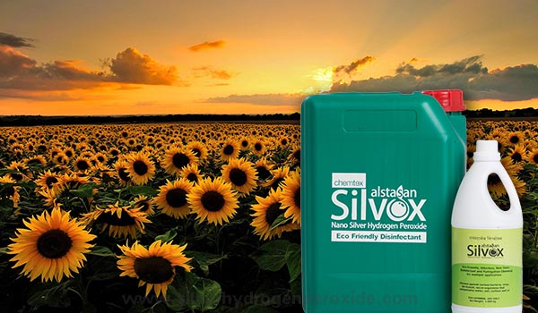 Sunflower_Cultivation_Disinfection1.jpg